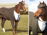 Лошадь-джентльмен)
